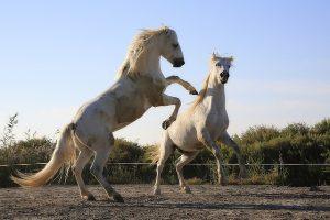 czego nie robić przy koniu