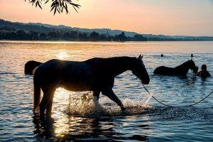 wprowadzanie konia do wody